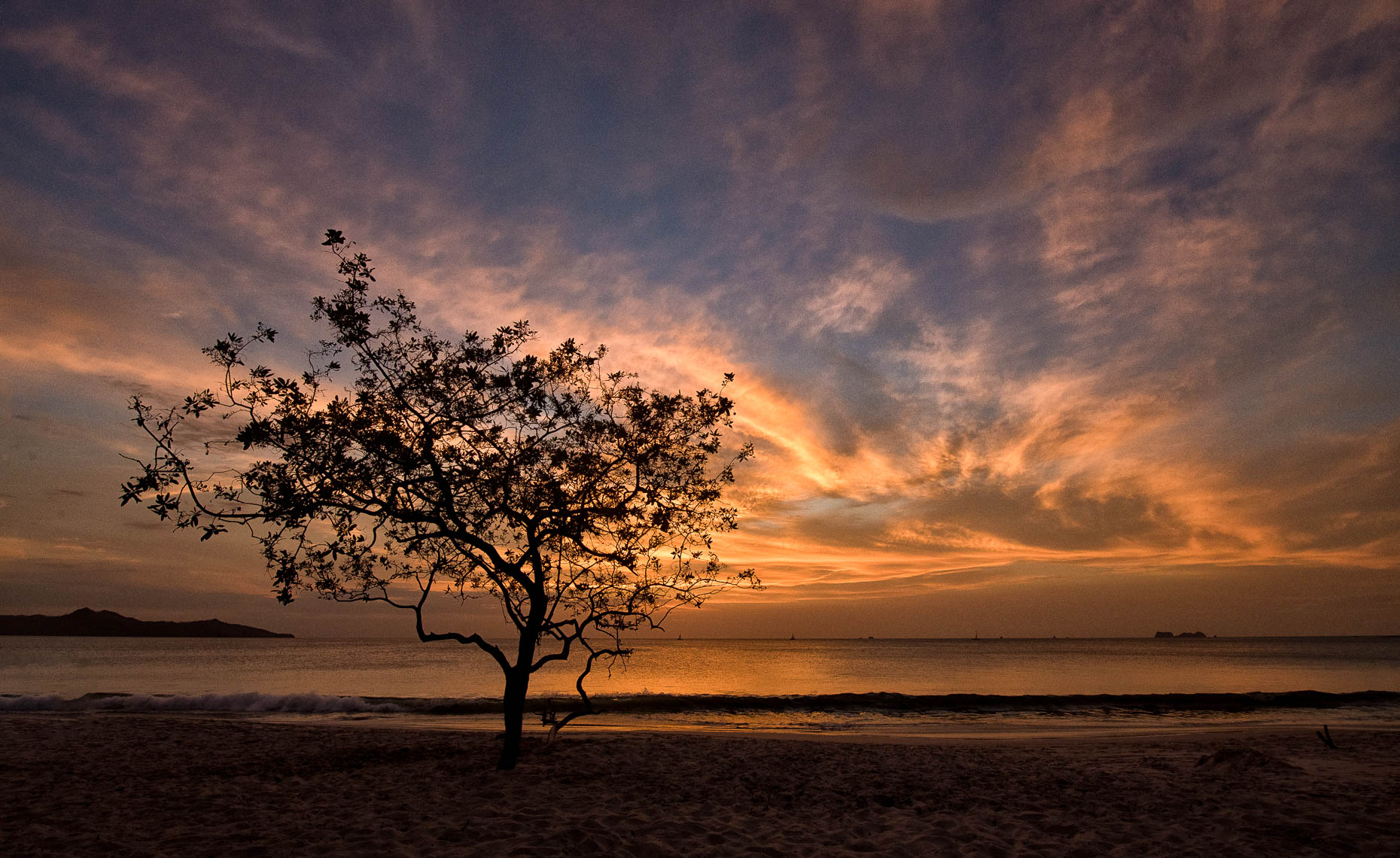 sunset_tree_cr_2